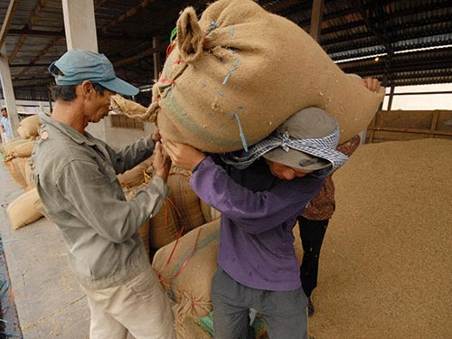Rice Exports 2013: Limiting Contract Termination from China